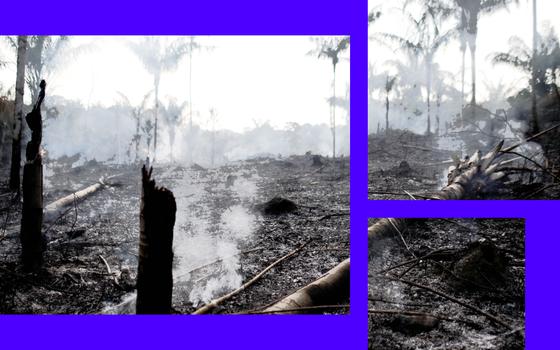 A política ambiental brasileira sob ataque: um palco de violências