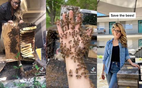 Como uma apicultora viralizou e deflagrou uma briga no TikTok