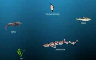A cerca de 200 metros de profundidade vivem animais como o tubarão-gato e a enguia-lobo