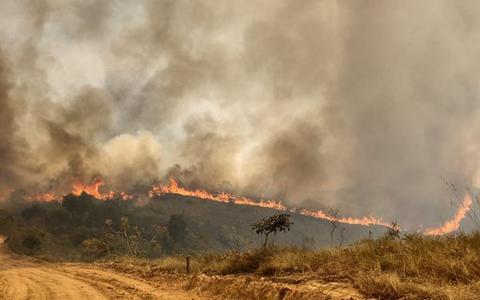 Incêndio devastou 80% de reserva do cerrado da Grande SP