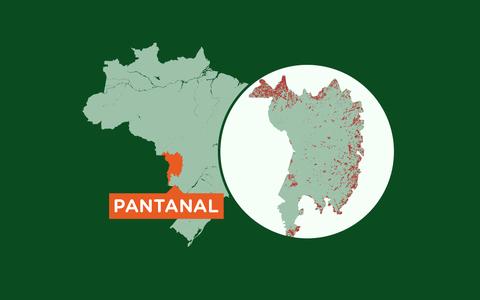 A extensão e a biodiversidade do Pantanal em números