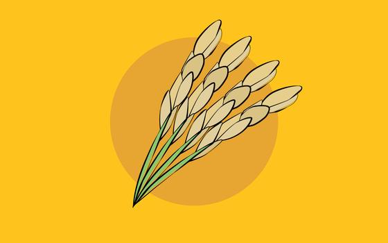 De onde vem o arroz. E onde ele é produzido