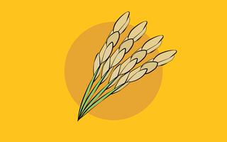 Veja em gráficos a produção de arroz no Brasil e no mundo
