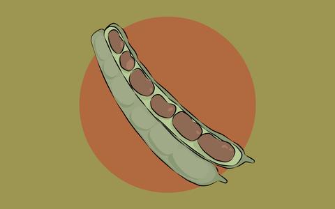 De onde vem o feijão. E onde ele é produzido no Brasil