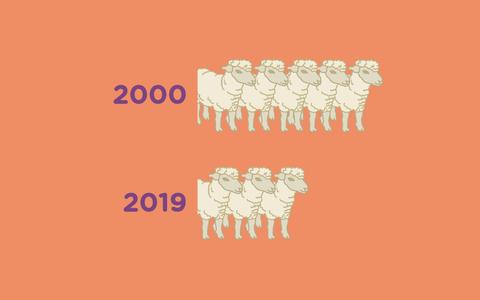 O histórico da produção de lã no Brasil e no mundo
