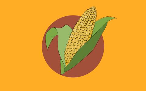 De onde vem o milho. E onde ele é produzido