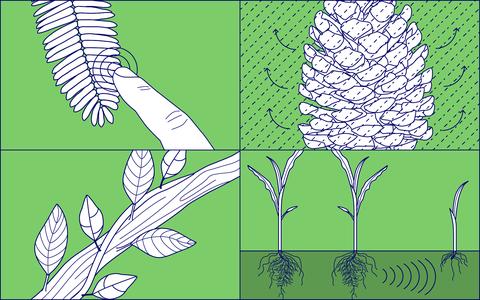 As plantas lembram, veem, se movem e se comunicam