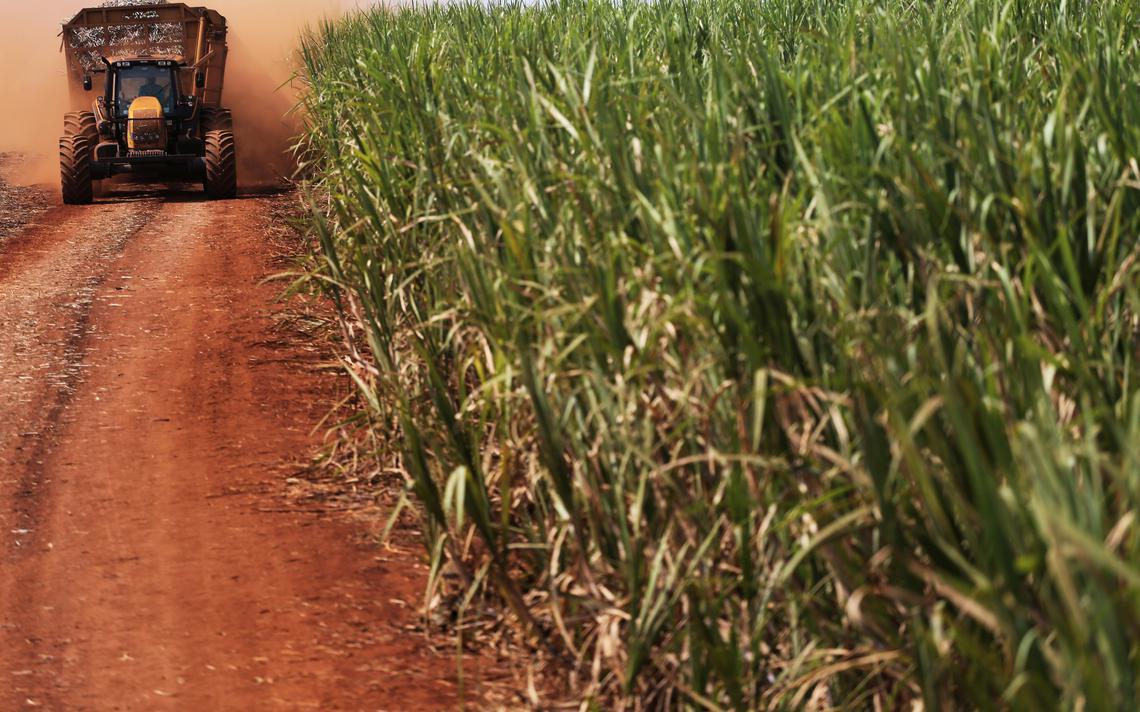 Trator carrega cana-de-açúcar em fazenda de Ribeirão Preto (SP)