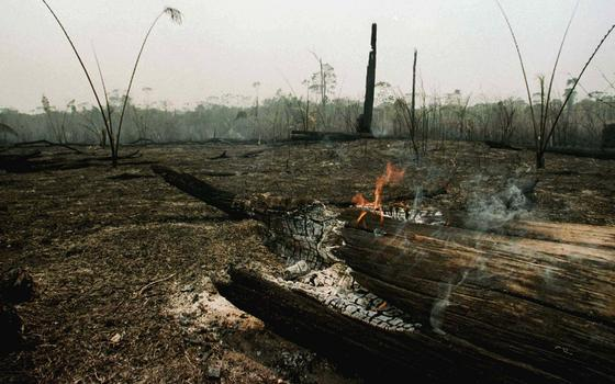 Por que o desmatamento é também um problema de segurança pública