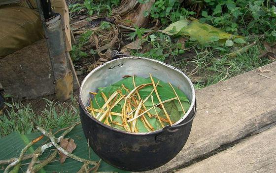 A morte do neto de Chico Anysio e o chá de ayahuasca. Eis o debate