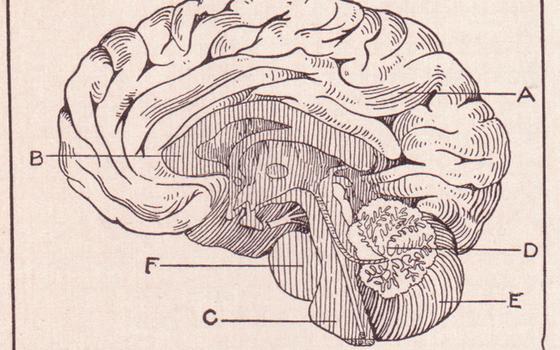 Experimento mostra efeitos da violência sexual no cérebro das vítimas