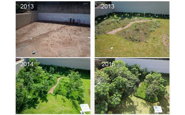 Evolução das florestas de bolso