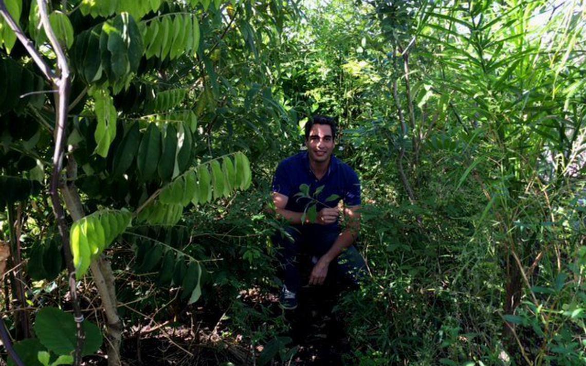 Ricardo Cardim em árvore de bolso sete meses após ter plantado