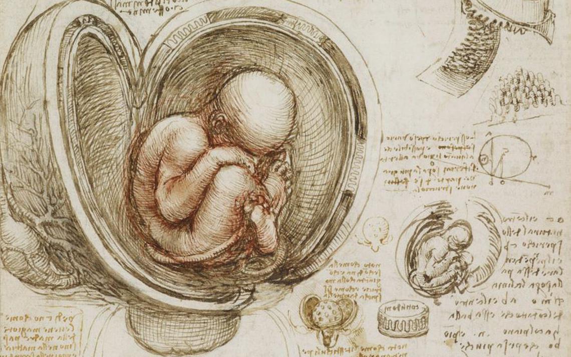 Detalhes de um útero humano com um bebê na posição pélvica