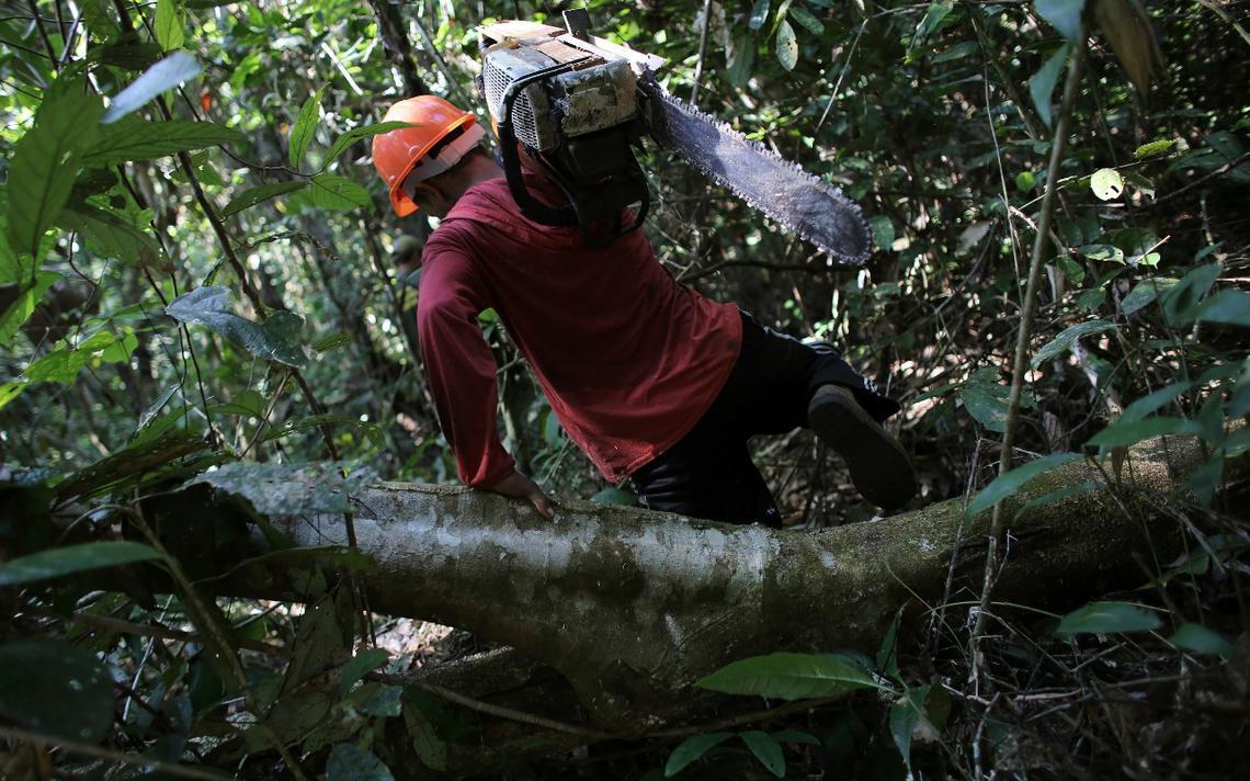 Homem transporta motosserra dentro da Floresta Nacional do Jamanxim, no estado do Pará, em 2013