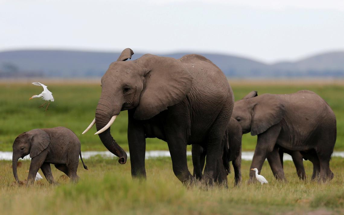 Família de elefantes caminha em parque nacional do Quênia