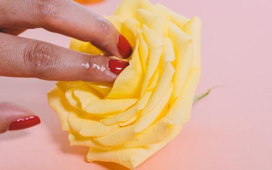 Fundo rosa, uma flor amarela. Dedos com unha pintada de vermelho, molhados, acariciam as pétalas
