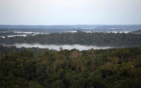 Cidades da Amazônia: a floresta que nunca foi virgem
