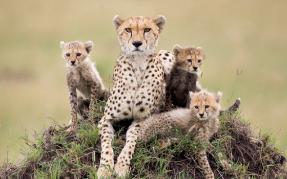 A fotógrafa que fez carreira registrando animais filhotes