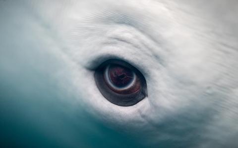 Apenas os seres humanos têm alma, ou os animais as possuem também?
