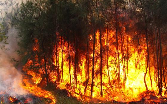 Roraima enfrenta índices históricos de incêndios. Este é o tamanho do problema