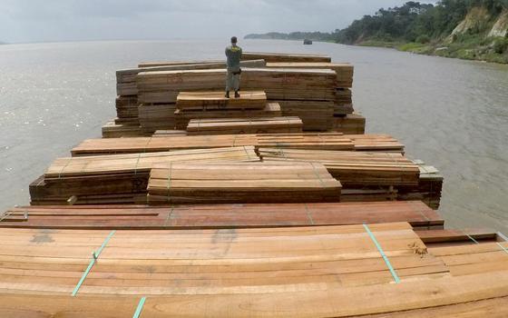 Como é o mercado (legal e ilegal) de madeira da Amazônia