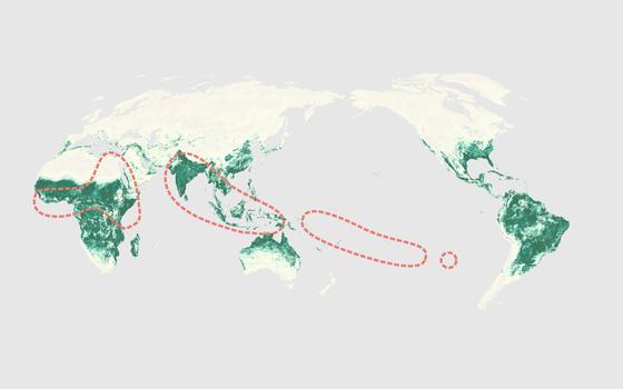 O caminho do zika vírus pelo mundo até as Américas
