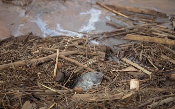 Tragédia no rio Doce: qual o impacto do mar de lama no meio ambiente