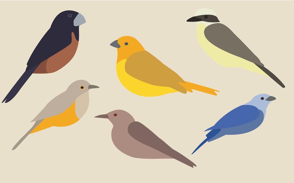 Quiz Pássaros