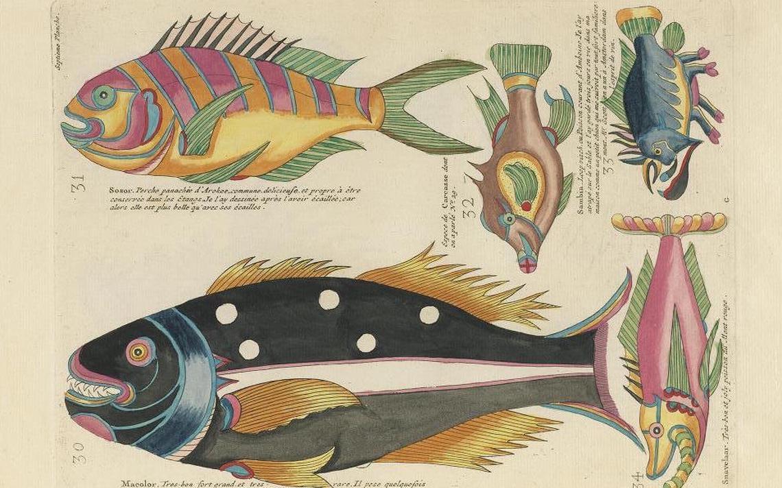 Ilustrações disponíveis no site Public Domain
