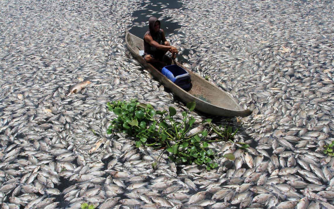 Homem navega sobre peixes mortos