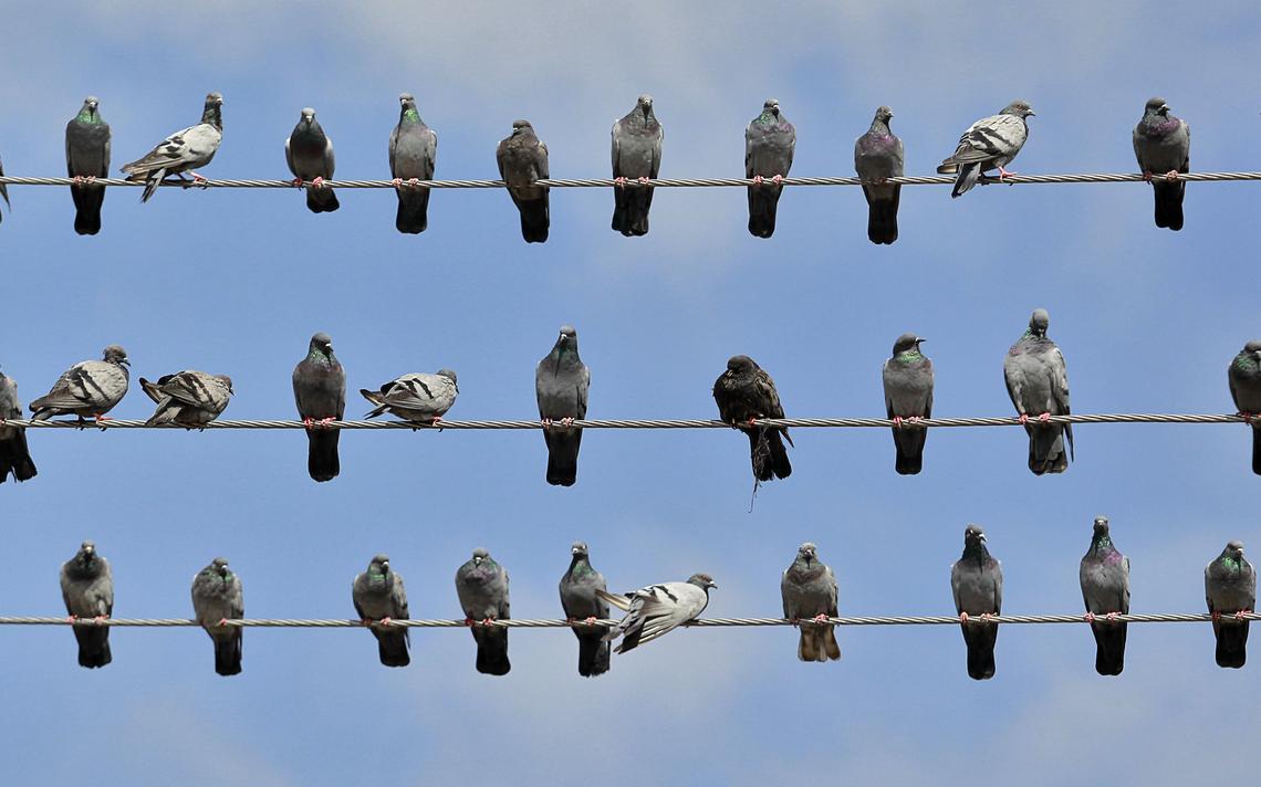 Aves são suspeitas de espionagem pela polícia da Índia