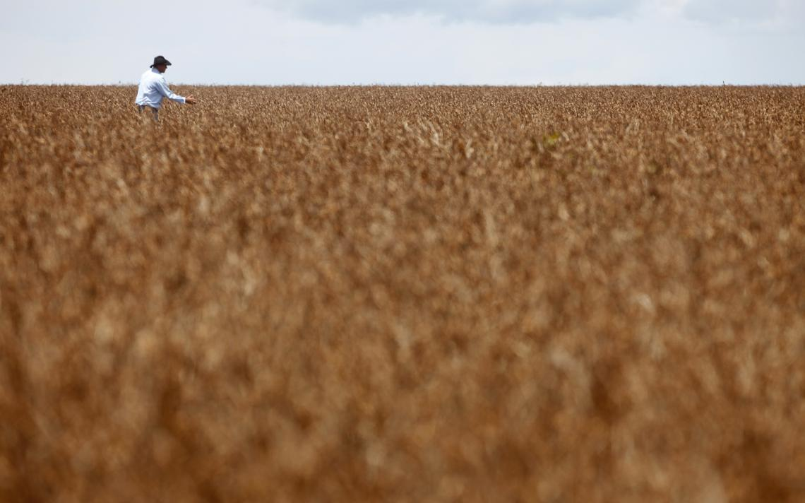 Plantação de soja em Tangará da Serra, no Mato Grosso