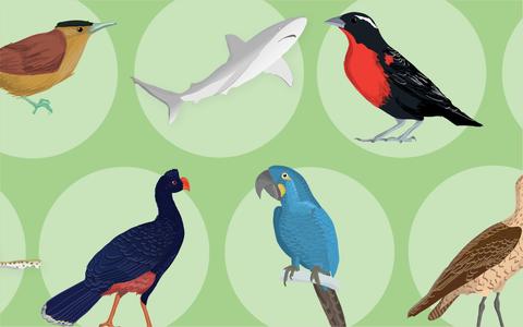 Quais são os animais extintos no Brasil