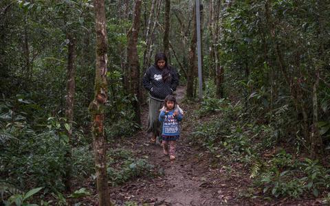 Saberes tradicionais guarani e o último rio vivo de São Paulo