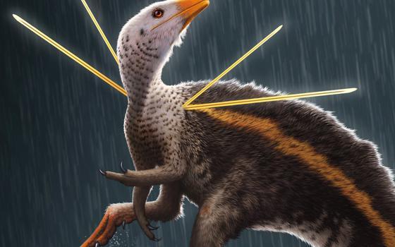 Como o tráfico de fósseis impacta a paleontologia