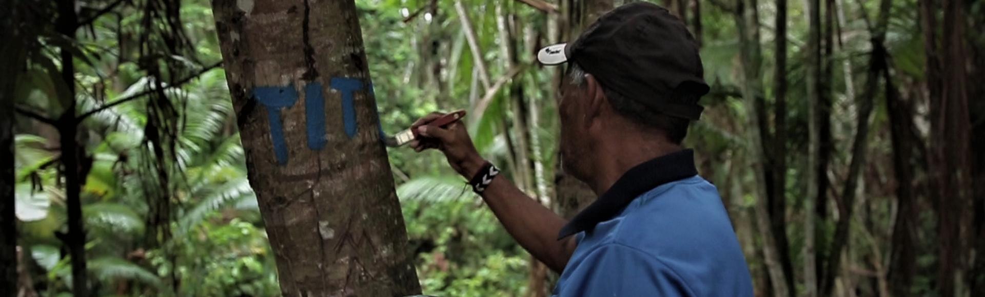 Seu Braz pintando árvores no processo de autodemarcação Tupinambá no Baixo Tapajós