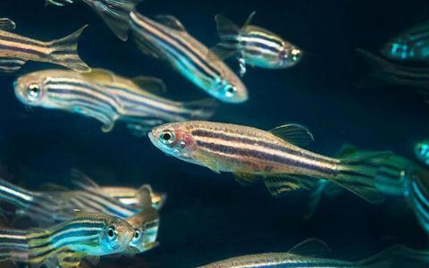 Quando animais aquáticos encontram o novo coronavírus