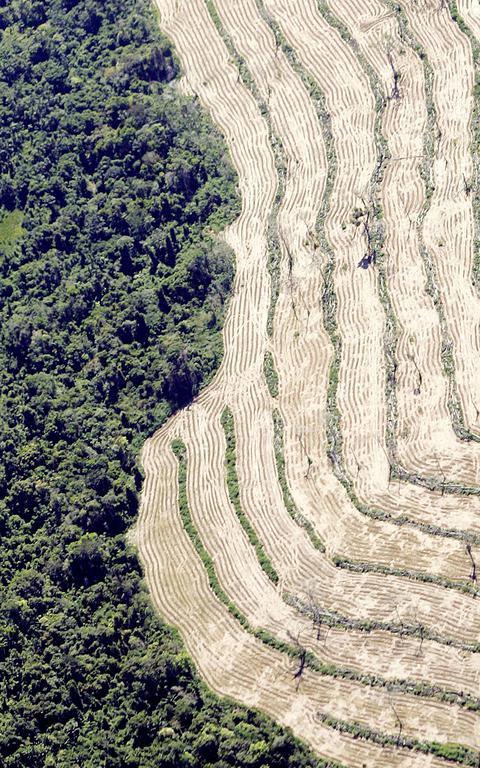 Área de floresta na Amazônia ao lado de área desmatada, no Mato Grosso